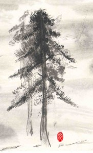 Picture of pines