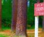 Chery-Hill-Park