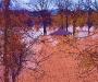 Flooded Donaldson Park