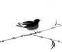 Bird-on-split-bamboo