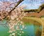 nick-virgilio-vietnam-and-cherry-blossom-haiga-by-rick-black